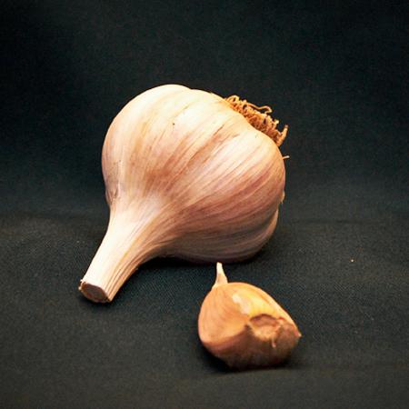 italian red seed garlic for sale