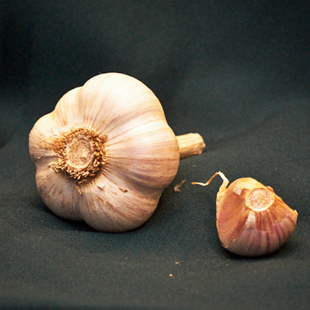 music garlic for sale