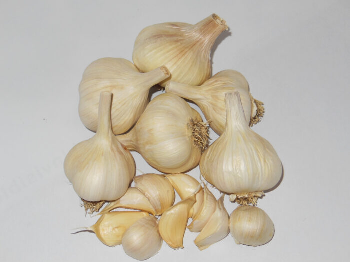 Susanville Garlic